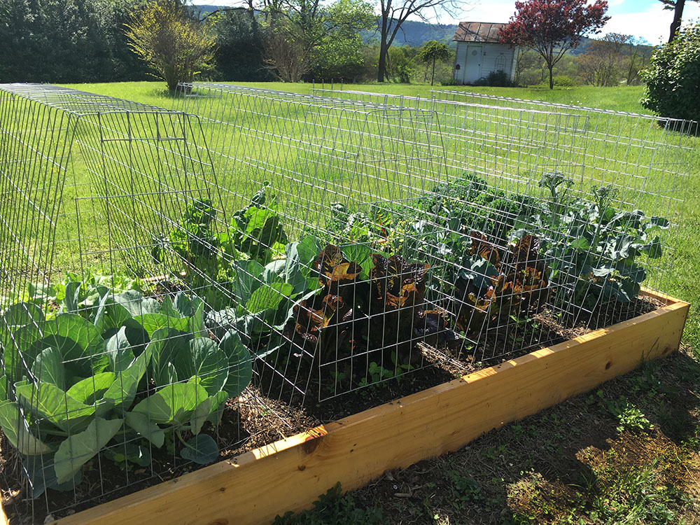 Raised Bed Favorite Regular Package Includes 4 Frames And 2